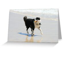 Playful Sonny Greeting Card
