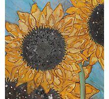 Gazing Sunflowers Photographic Print