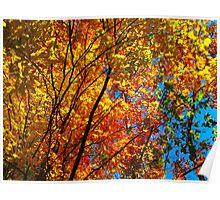 Leaf Adrenalin Poster