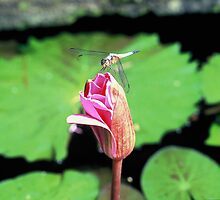 dragonfly flower by donnz