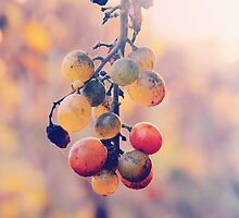 Racimo de uvas by Constanza Caiceo