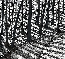 'Trees and Shadows' by Jerry Kirk