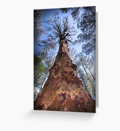 The Majestic Mountain Ash Greeting Card