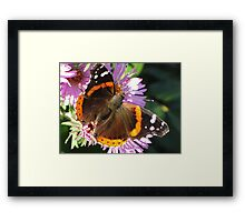 Admiral Wings Framed Print