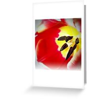 Two Toned Tulip Greeting Card