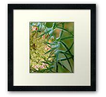 Queen Ann's Lace (Daucus carota) Framed Print