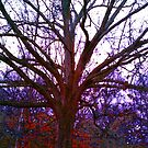 Color Altering of My Front Yard Giant by Charldia