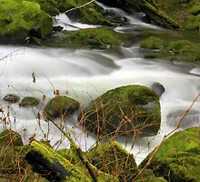 Sweet Creek..Oregon by aussiedi