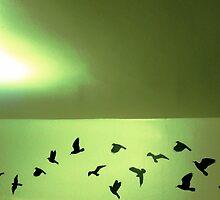flock by kimseyJune