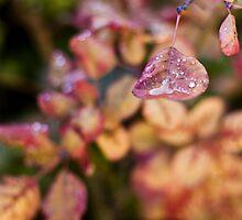 Carrying tears by Julia Goss