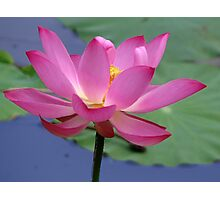 Lotus Inspirations Photographic Print