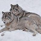 Pride of the Pack by Bill Maynard