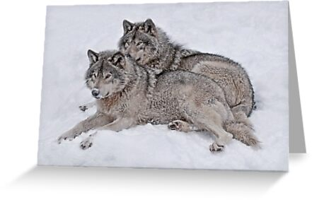 Pride of the Pack by Bill Maynard