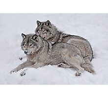 Pride of the Pack Photographic Print