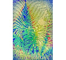 Fern and Fireweed 01 Photographic Print