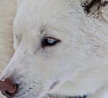 snowy dog by Jeanne Frasse