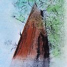 General Sherman Redwood in Minerals by David M Scott