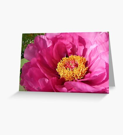 Perfectly Pink Greeting Card