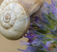 Snail on Sea Holly Flower Sticker