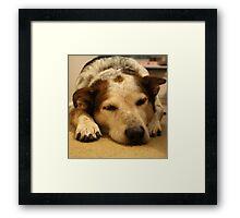 Indy Sleeping Framed Print