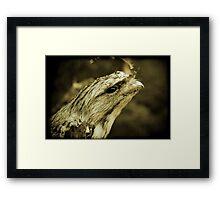 Frog Mouth Framed Print