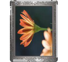 Osteospermum named Sunadora Palermo iPad Case/Skin