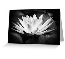 The waterlily Greeting Card