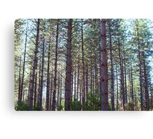 Trees in the forest Canvas Print