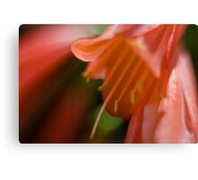 Flower macro abstract Canvas Print