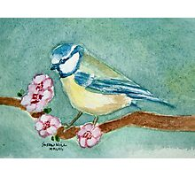 Blue Tit among the blossom Photographic Print