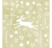 Hare in the Meadow Photographic Print