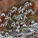 Snowdrops in the snow. by Shoshonan