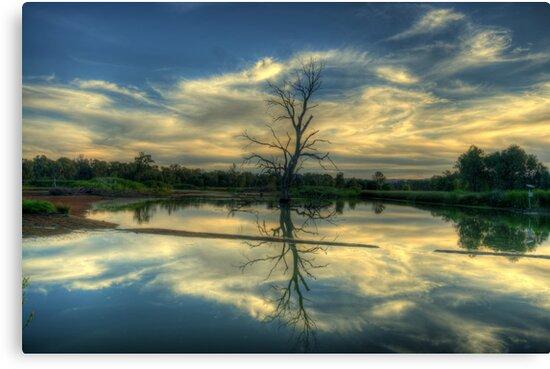 Wetland Dreaming Trees - Wonga Wetlands, Albury ,  Australia - The HDR Experience by Philip Johnson