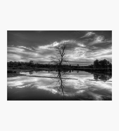 Wetland Dreaming (Monochrome) - Wonga Wetlands, Albury ,  Australia - The HDR Experience Photographic Print
