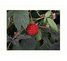 The Raspberry Art Print