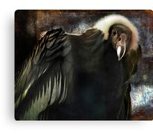 Andean Condor Portrait. I think she's beautiful but to her I am just another piece of meat. Canvas Print