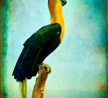 Portrait sitting with a Red-Knobbed Hornbill by alan shapiro