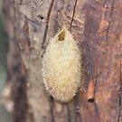 Cocoon? by dilouise