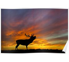 Roaring Stag at Sunset Poster