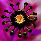 hippy flower by NicoleConrau