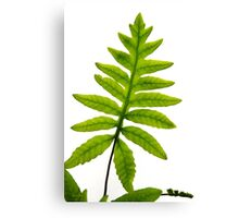 Fern Leaf Canvas Print
