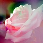 WHITE ROSE. by Vitta