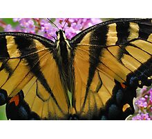 Macro Butterfly Photographic Print