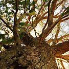 Dreaming Tree by RainbowWomanTas