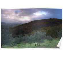 Olive Groves Greve in Chianti Poster