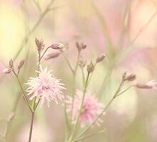 Pastel garden by Anne Staub