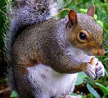 Bright Eyed & Bushy Tailed by Chris Goodwin