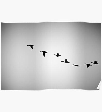 FLYING BIRDS SILHOUETTE  Poster