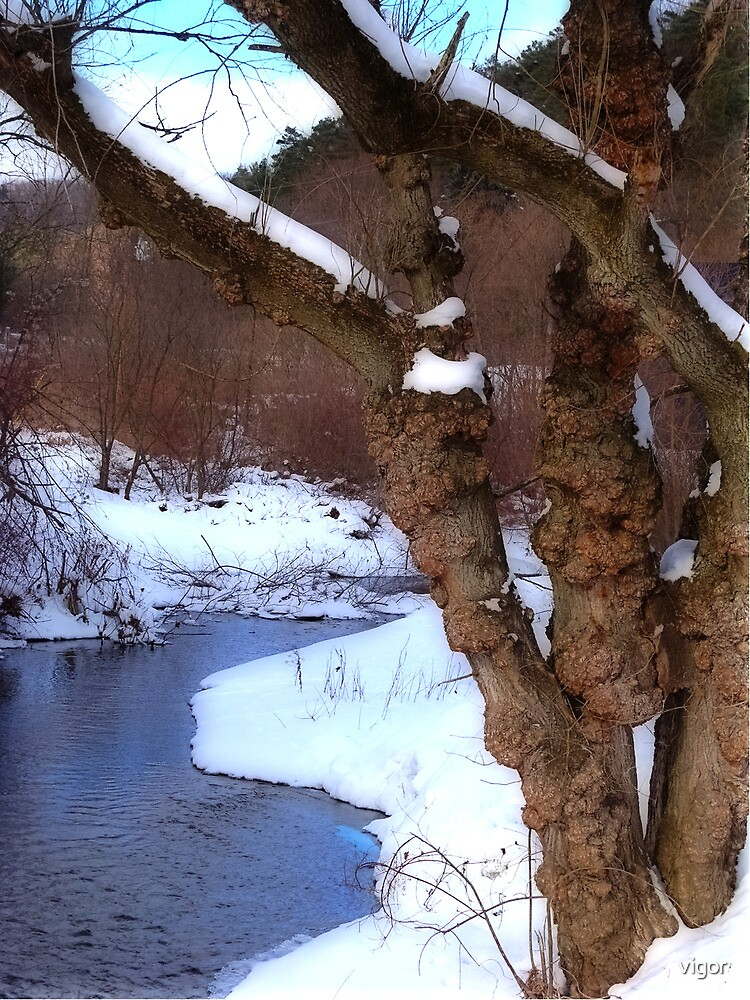 The Willow in Winter by vigor