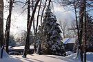 SnowyScape by John Schneider
